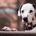 Dog collar lights